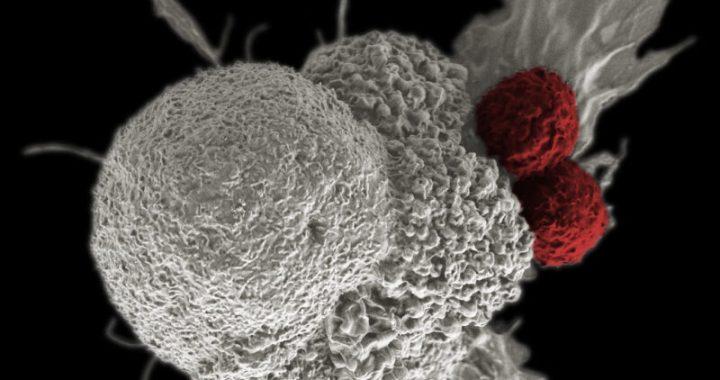 Cancro: Ginseng Rosso efficace contro le metastasi