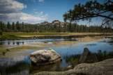 baja-pine-forrest-trail-of-missions-2017-harroldphoto-02