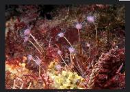 rm2010ectopleura1