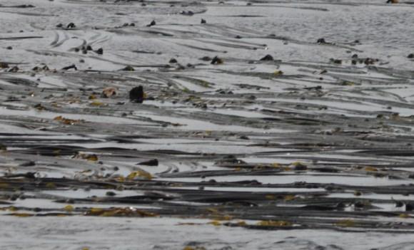Spot the Sea Otter?