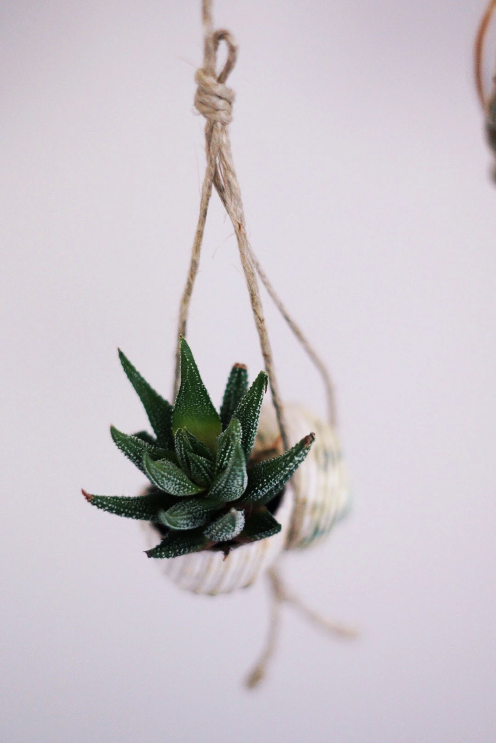 Create a Succulent Hanging Garden in Seashells For Mothers Day by Rachael Burgess