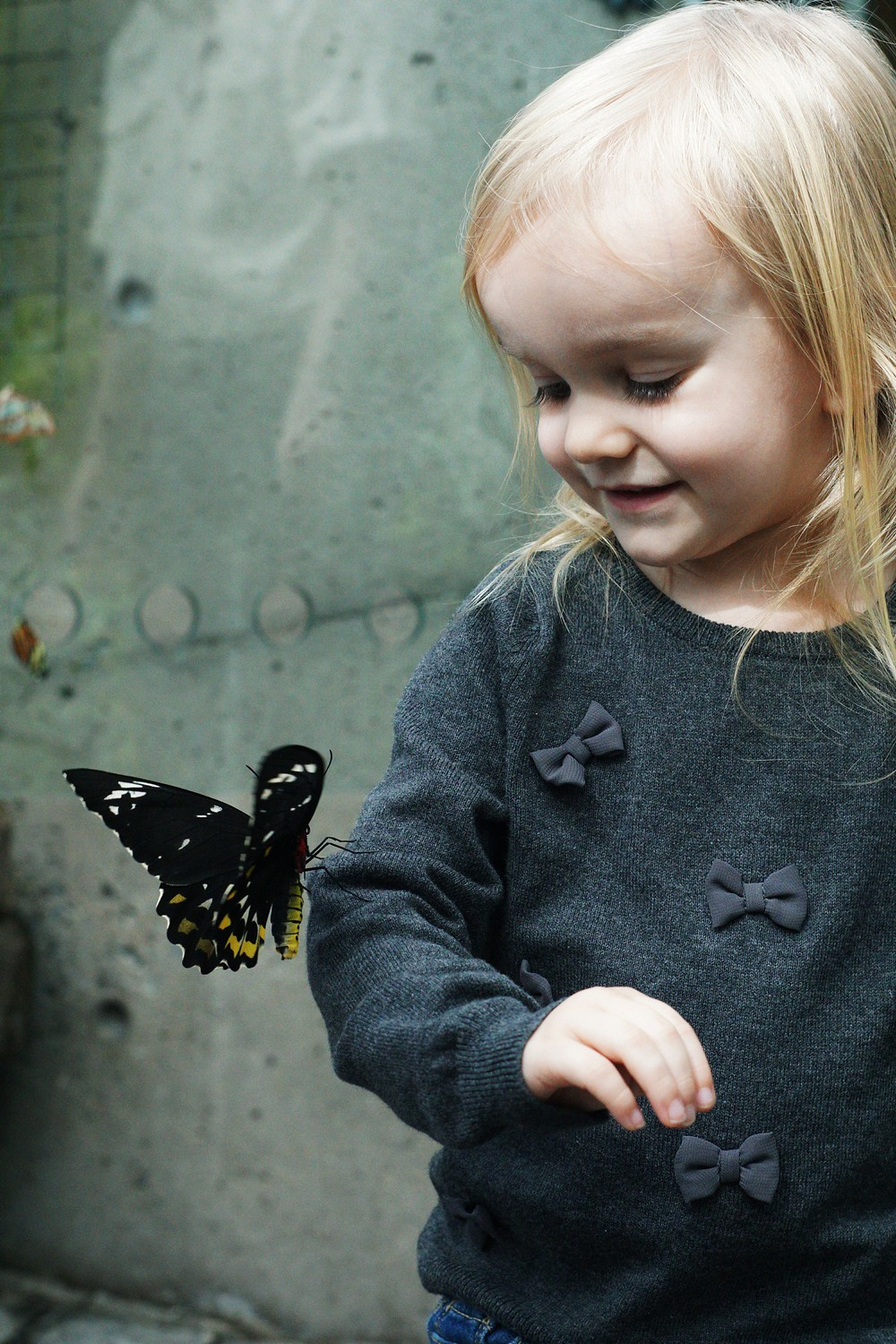 Visiting the Butterfly Conservatory in Niagara Falls by Rachael Burgess