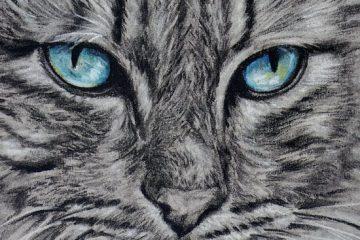 Blue Eye Cat 1