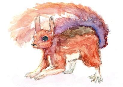 Aquarel squirrel
