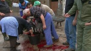 Zev Robinson Arribes. Slaughtering pig