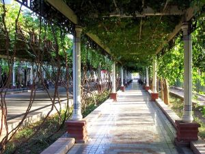 Streets shaded by vines in Turfan