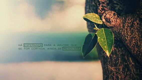 wallpaper-cristao-hd-há-esperança-árvore-cortada_1366x768