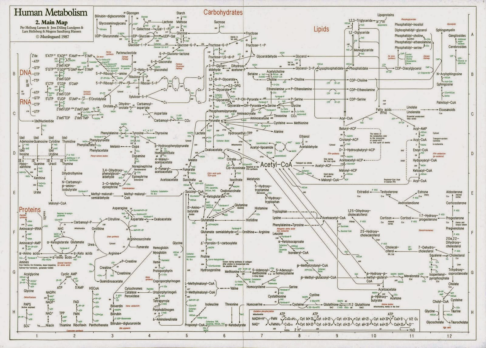 O arquiteto da vida: O complexo mapa metabólico humano