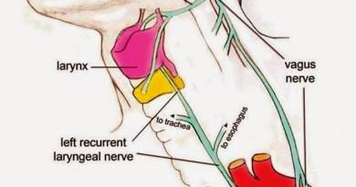 """O suposto """"Bad Design"""" no nervo laríngeo recorrente"""