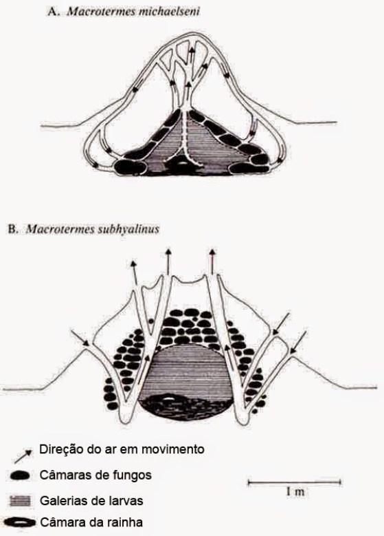 Esquema descoberto do interior do cupinzeiro e suas estruturas.