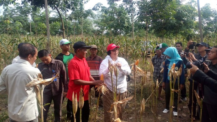 Kunker Menteri LHK Ke Provinsi Lampung Tinjau Pemanfaatan Fungsi Hutan Untuk Pertanian dan Perkebunan