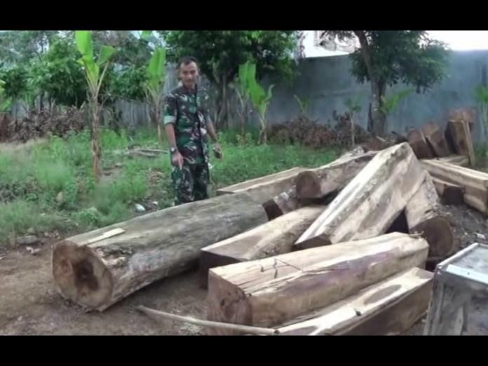 Kodim 0421 Lamsel Siap Berantas Ilegal Logging di Pesawaran