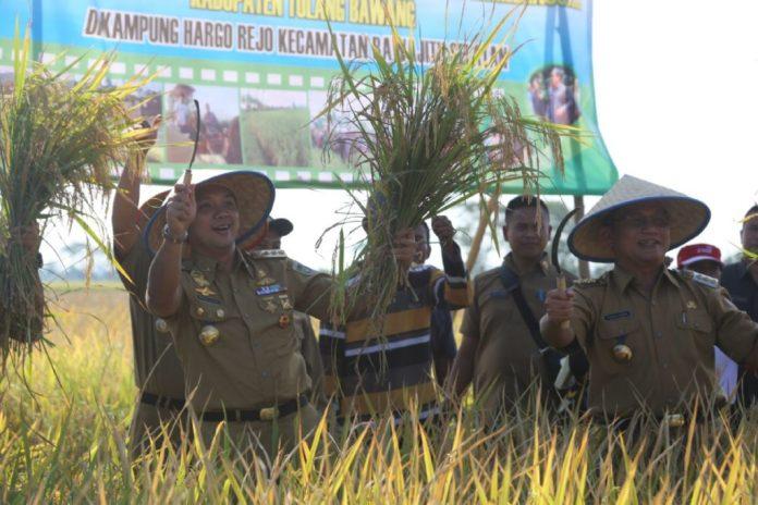 lampung-jadi-lumbung-padi-nasional-pemprov-lampung-siapkan-cetak-sawah-11-995-hektar