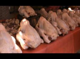 Kekosongan Stok, Harga Ayam Potong Melangit