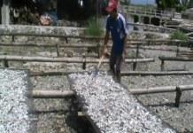 Pengusaha Ikan Asin Hentikan Produksi