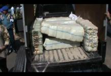 Pomal Lampung Amankan Ratusan Kilogram Daun Ganja