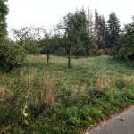 Dorfentwicklung - AG Streuobstwiese Schröders Garten