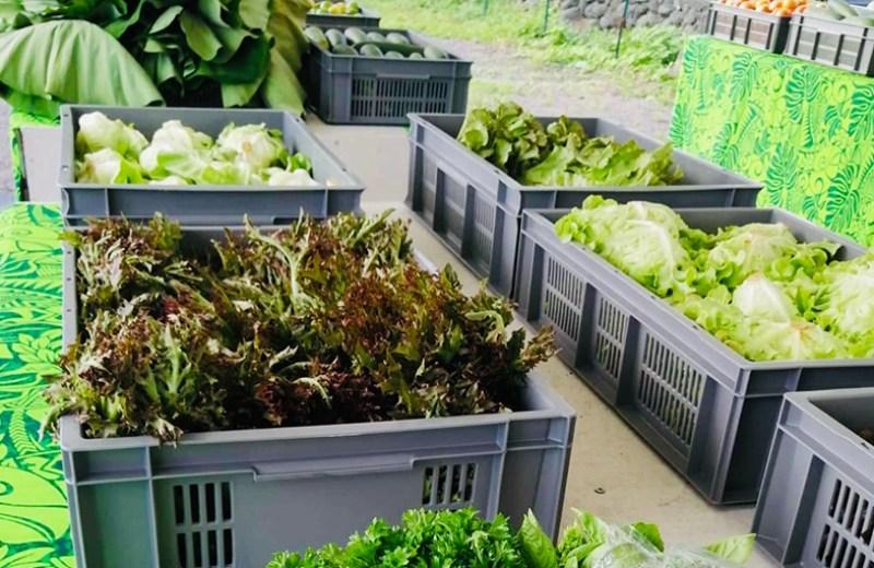 local farms fruits legume (3)