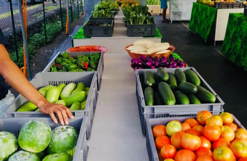 local farms fruits legume (4)