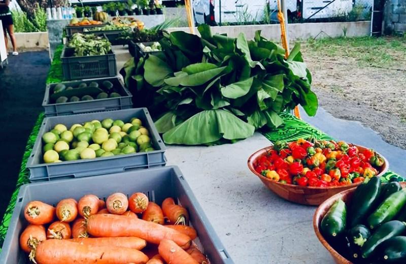 local farms fruits legume (8)