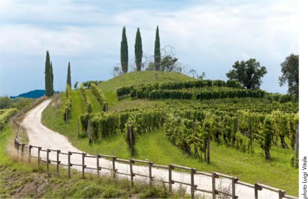Vigne Museum Landscape