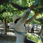 """""""Se llegó a un acuerdo con el sector vitivinícola por el precio de la gamela"""""""