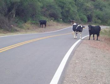 Una constante, animales en la ruta. La foto fue enviada por un lectór de la página.