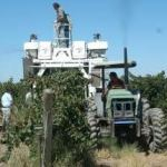Mayoritariamente se piensa que las cosechadoras harán perder mano de obra