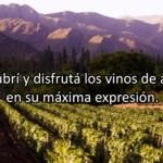 Nueva edición de la Semana del Vino en Salta