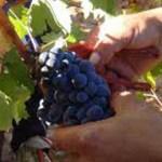 Curso de formación de asesores en vitivinicultura orgánica