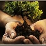 Programa de actividades para la Semana del Árbol en Cafayate