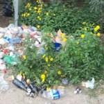 Seguirán limpiando basura de la Serenata