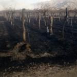 Un  voraz incendio quemó viñedos y campos