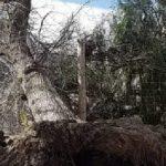 Graves daños por el viento zonda en Cafayate