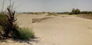 Dunes de les platges de la Costa Brava