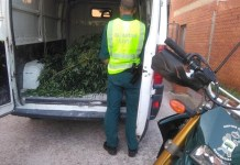 Agent davant de la furgoneta amb les plantes de marihuana a Santa Cristina d'Aro | Imatge de la Guàrdia Civil