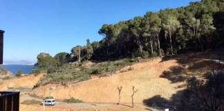 Tala d'arbres a Sa Riera