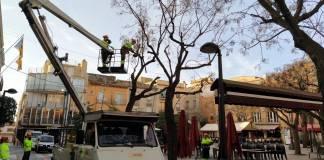Talada d'arbres a la Plaça Nova de Palafrugell | Imatge de l'Ajuntament