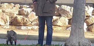 Cabra a Palafrugell per trencar el confinament   Imatge dels Mossos d'Esquadra