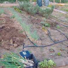 Els hortolans de Begur podran accedir als horts d'Es Sot al municipi durant l'estat d'alarma   Imatge de l'Ajuntament de Begur