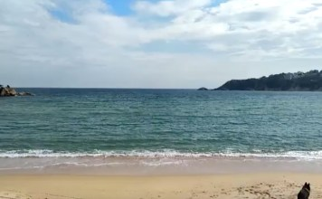 Platja de Sant Pol on s'han vist dos taurons a la platja de Sant Feliu de Guíxols   Imatge del vídeo