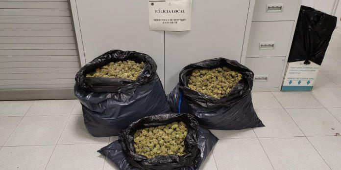 Troben 11 quilos de marihuana en un control de la policia local de Torroella | Imatge del consistori