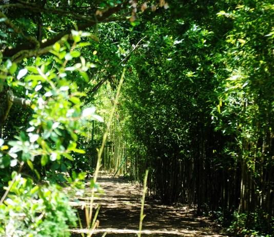 privat:-canvien-els-horaris-per-visitar-els-jardins-del-monestir