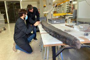 Arqueòlegs del CASC estudiant l'arquitectura naval de les restes d'un dels vaixells descoberts al Cap de Creus per comparar-les amb el Fomigues I, aquest 18 de novembre del 2020 (Horitzontal)