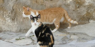privat:-campanya-per-coneixer,-controlar-i-millorar-el-benestar-de-les-colonies-de-gats-del-municipi