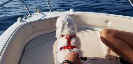 gos en una embarcació
