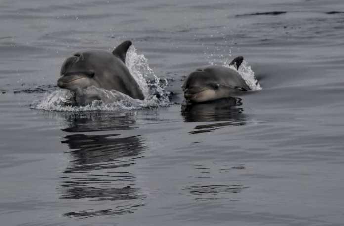 Dofins a Palamós | Imatge de Noa 18 Nusos
