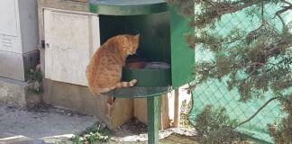 privat:-l'ajuntament-inicia-un-proces-per-ordenar-i-millorar-la-gestio-de-les-colonies-de-gats-de-carrer