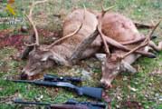 Santa Olalla de Cala | La Guardia Civil sorprende a tres cazadores furtivos que habían abatido dos venados