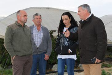 El Ayuntamiento inicia el procedimiento para solicitar la declaración de Zona Afectada Gravemente por una Emergencia de Protección Civil